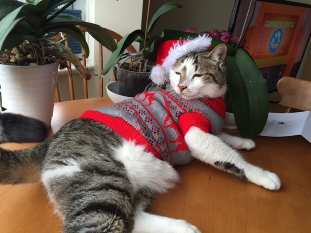 Ho ho Whore Cat